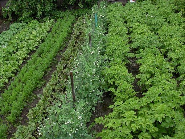 Подкормка и биологические стимуляторы усиления роста растений