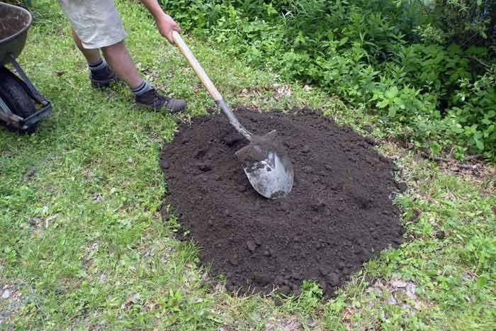 Как посеять газонную траву под зиму. возможна ли посадка газона, в осенний период? как правильно засеять газон осенью