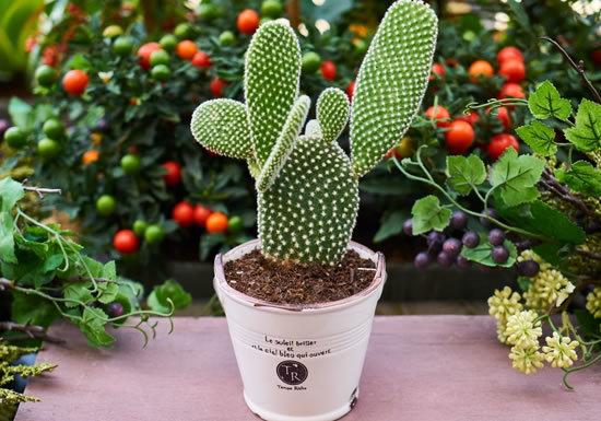 Как правильно ухаживать за кактусом в домашних условиях