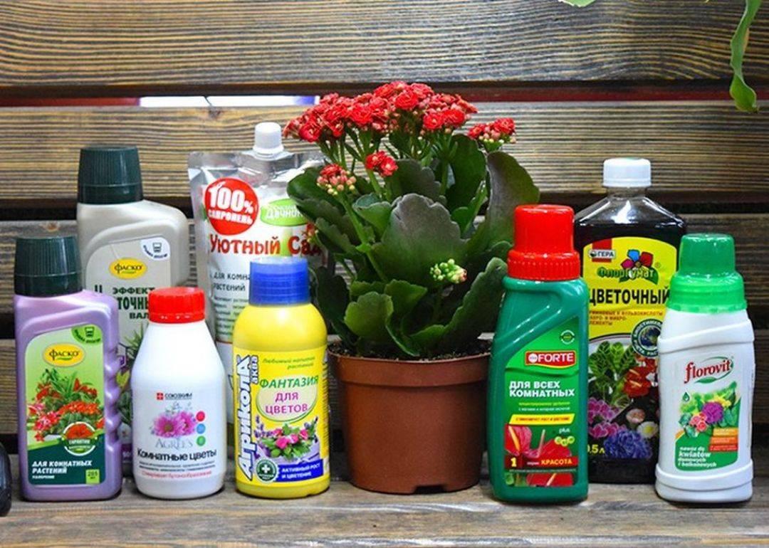 Азотные удобрения: это какие. виды и применение, роль в питании растений