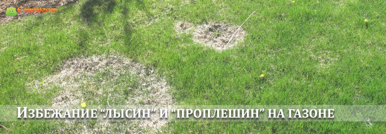 Как сажать газонную траву - пошаговая инструкция технологии посадки