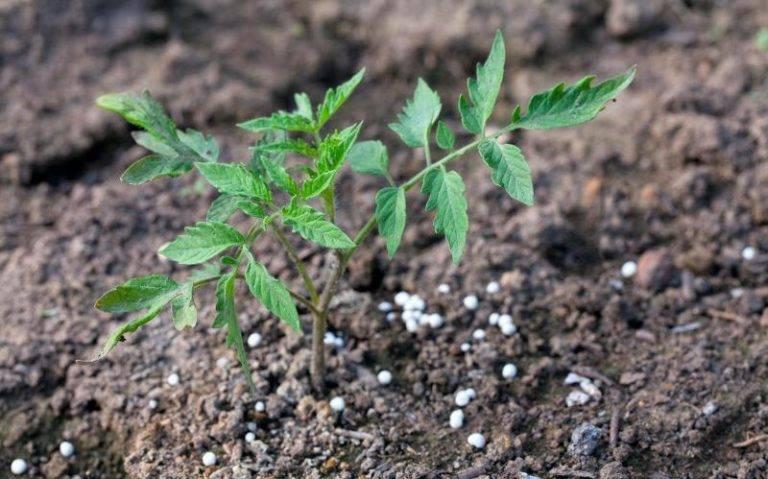 Применение суперфосфата осенью на огороде. куда вносить, дозировка