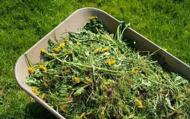7 удобрений для огорода своими руками