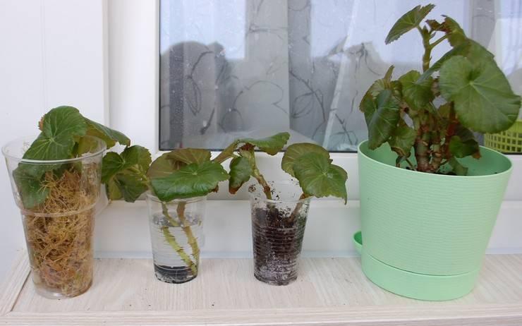 Садовая орхидея трициртис: мастерство выращивания и портфолио сортов