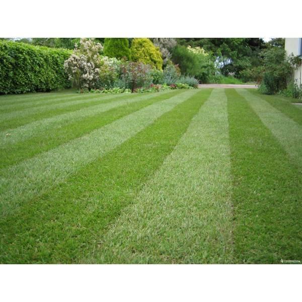 Какой газон лучше рулонный или посевной?