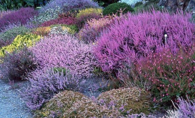Как посадить и ухаживать за вейгелой в открытом грунте: правила выращивания