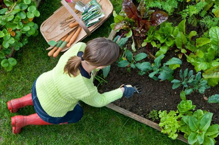 Ленивый сад и огород создаем своими руками — фото необычных и практичных решений