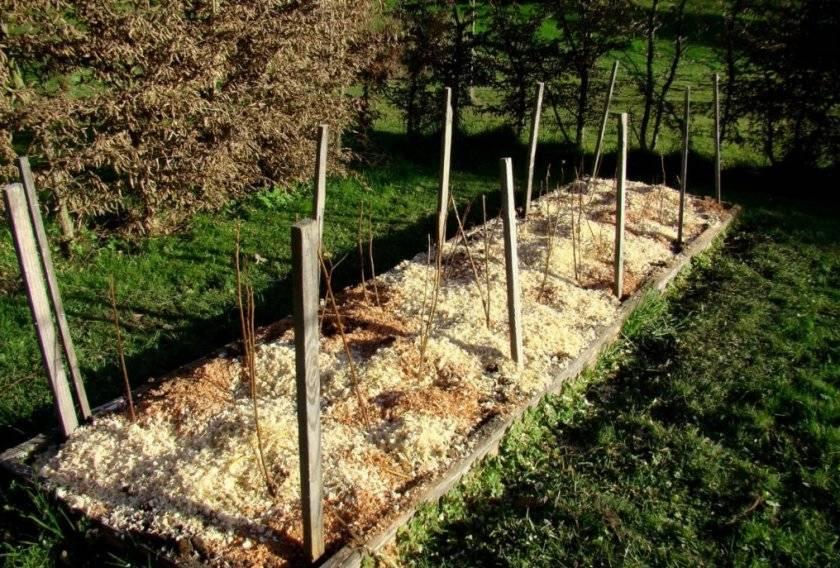 Польза осеннего мульчирования для почвы на дачном участке