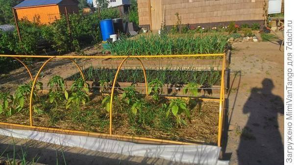 Огород по курдюмову — урожайность и красота