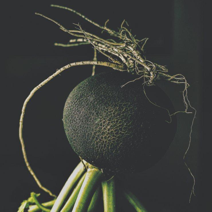 Черная редька: полезные свойства и противопоказания, отзывы