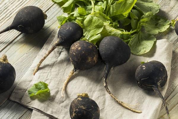 Черная редька: полезные свойства и вред