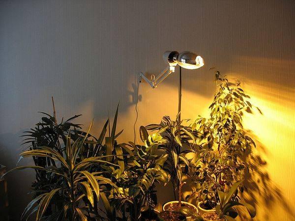 Виды ламп освещения – обзор и характеристики