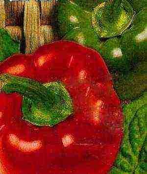 Лучшие сорта перцев для теплиц в сибири