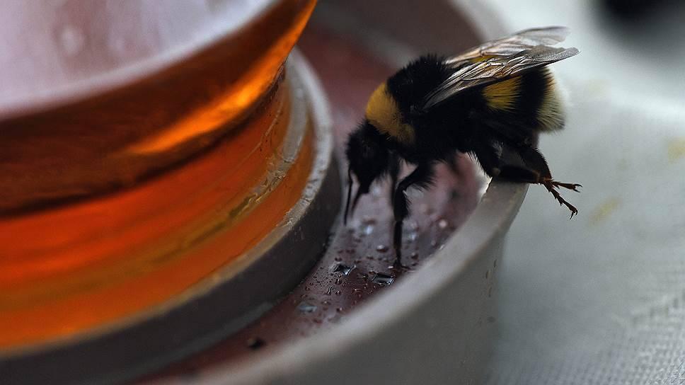 Пчелы-осмии