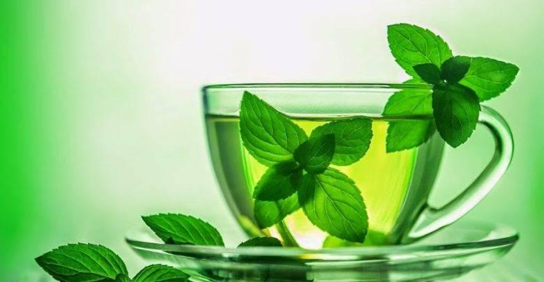 Умиротворяющий чай с мелиссой и его польза для организма