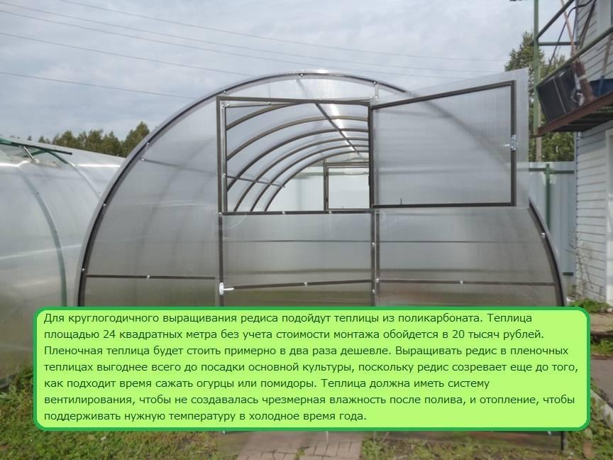 Выращивание редиса зимой в теплице: посадка и уход