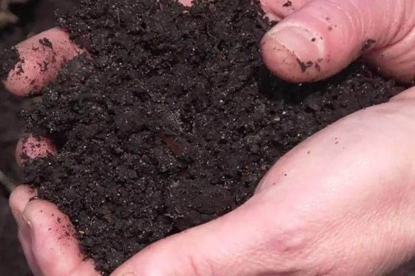 На огороде одолел хрен? узнайте, как вывести надоедливое растение навсегда!
