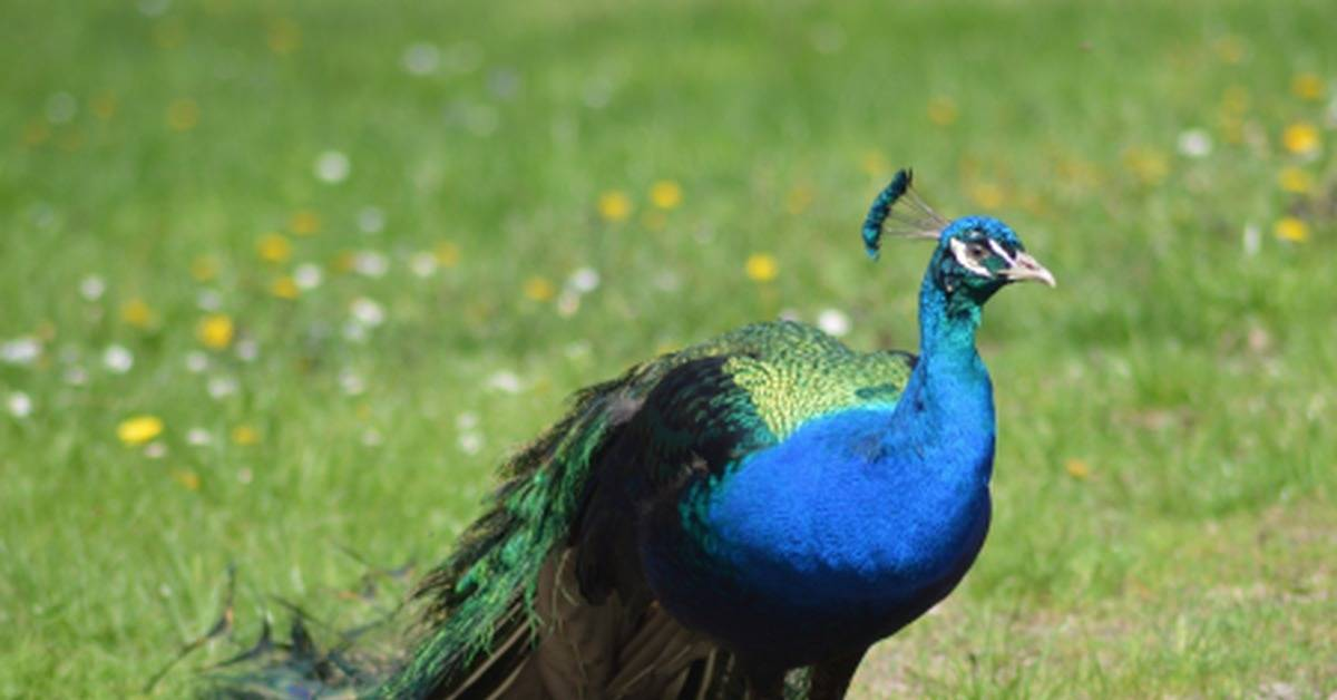 Какую птицу выгоднее разводить в домашних условиях?