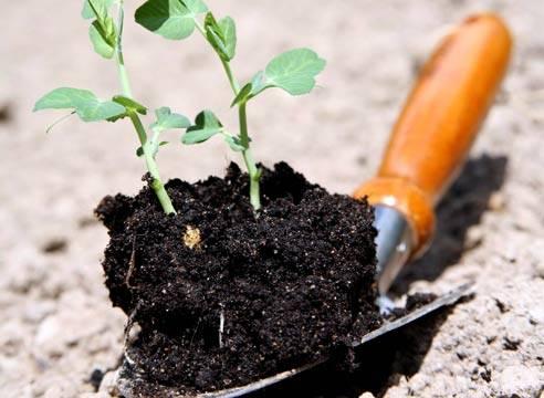 Двухкомпонентная подкормка цитовитом и цитроном – питание и бодрость растений