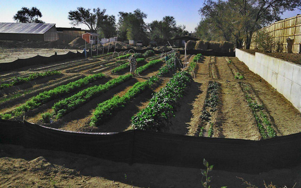 Огород по митлайдеру: с чего начать?