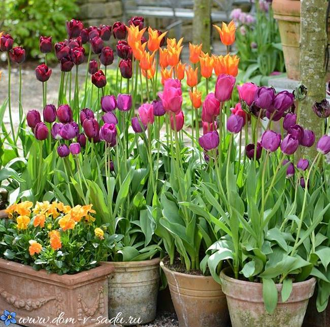 Правильная посадка ирисов осенью — гарантия обильного цветения весной