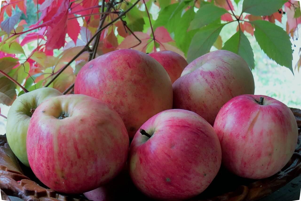 следовать инструкции сорт яблони оранжевое фото и описание сорта начинается вешалки, дом