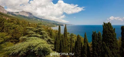 Дерево секвойя - где растет, высота, фото и описание, видео