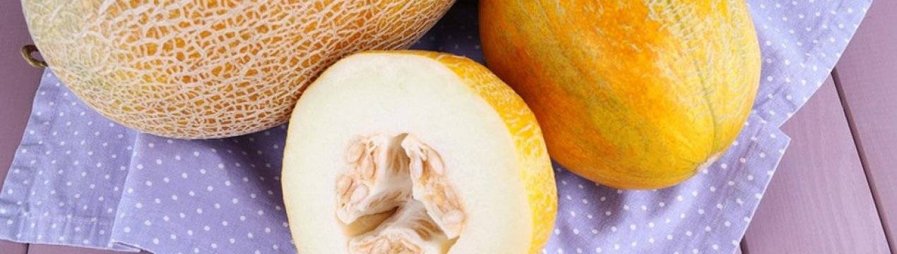 Дыня: польза и вред для организма и здоровья человека