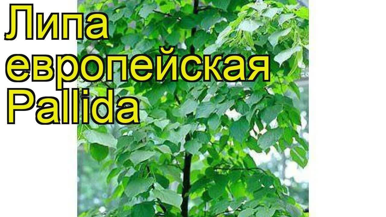 Профессиональный ландшафтный дизайн своими руками: фото с названиями декоративных деревьев для сада