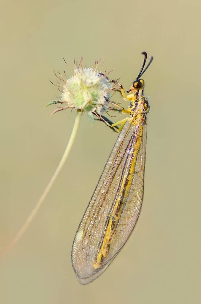 Мохнатая зеленая гусеница. как волосатые гусеницы могут предсказывать погоду