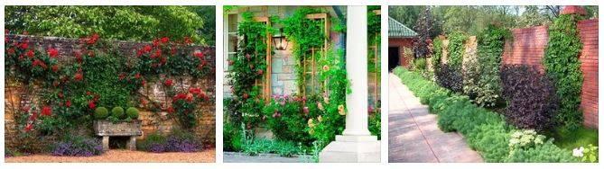 Вертикальное озеленение – подбор растений и инструкции по выращиванию своими руками
