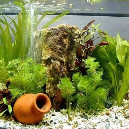 Аэратор для аквариума своими руками
