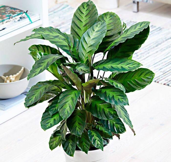 Фото болезней асплениума и уход за растением
