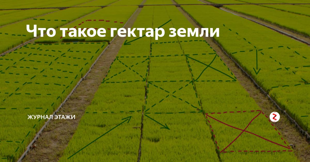 Гектар (га) → квадратный метр (м²), метрическая система