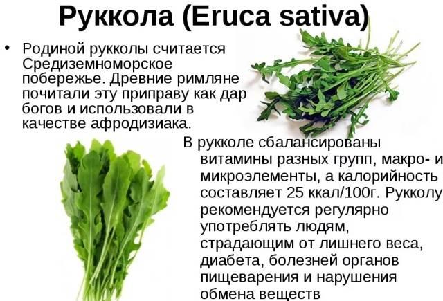 Польза и вред салата руккола для организма человека