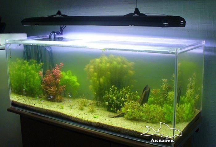 Как быстро и качественно сделать сифон для аквариума своими руками?