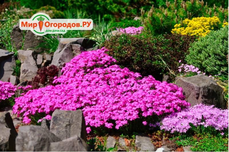 Сажаем цветы на альпийской горке: какие и как
