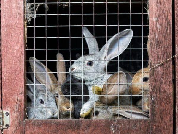Разведение кроликов в яме — лучший способ увеличить их популяцию