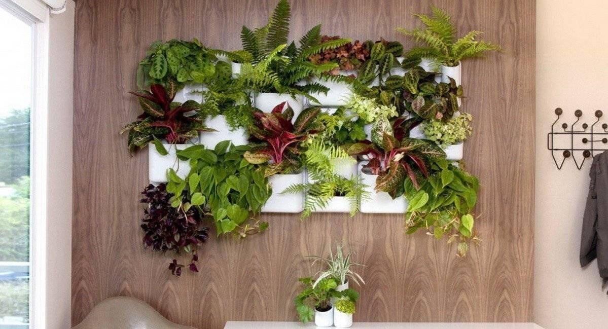 Комнатное растение филодендрон: виды с фото для выращивания дома