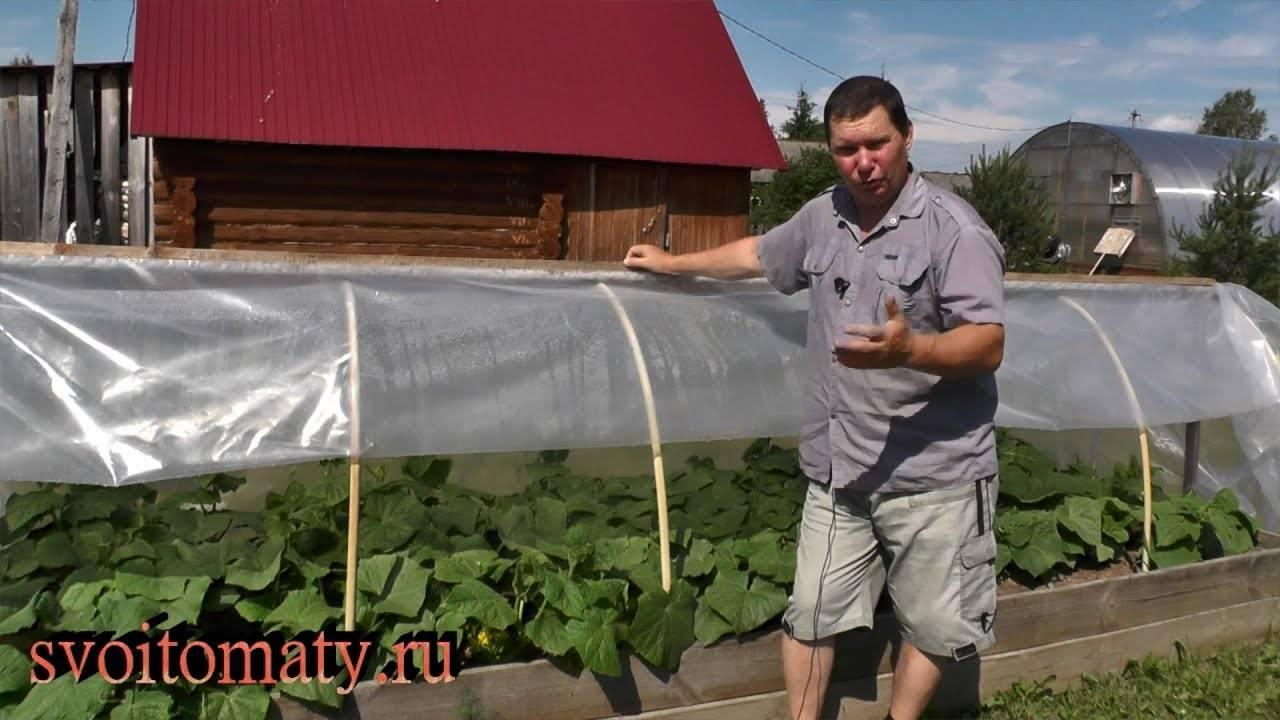 Выращивание рассады в открытом грунте под пленкой