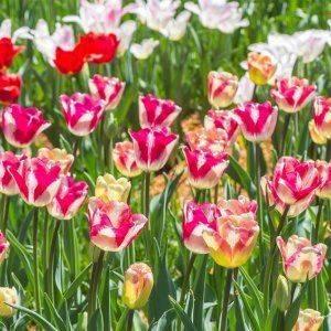 Однолетники: уход, выращивание и оформление клумбы