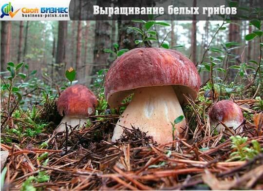 Способы для новичков: как вырастить грибы на даче