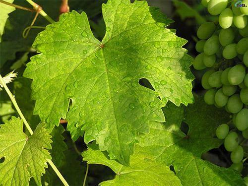 Игристые вина: 5 рецептов в домашних условиях