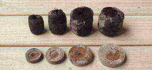 Как выращивать рассаду в торфяных таблетках, посев семян