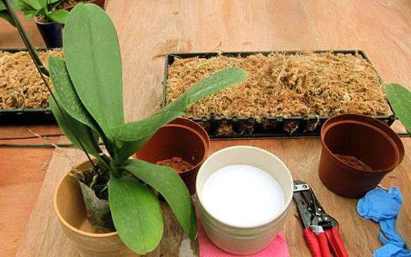 Как выглядит рогоз фото и камыш. рогоз — описание и особенности растения