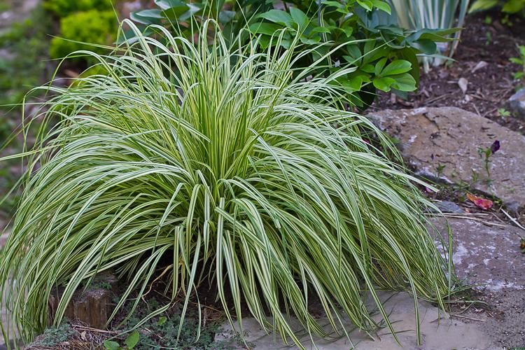 Декоративная трава: 90 фото красивых вариантов применения декоративных растений в ландшафтном дизайне