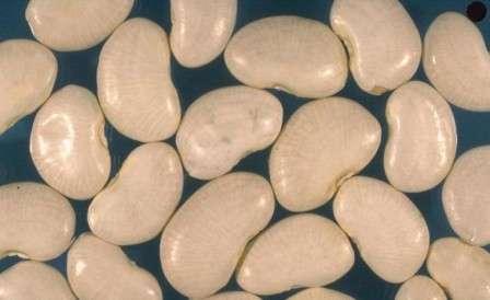 Топ-26 лучших сортов фасоли с фото и описанием: каких разновидностей они бывают и как подобрать нужную