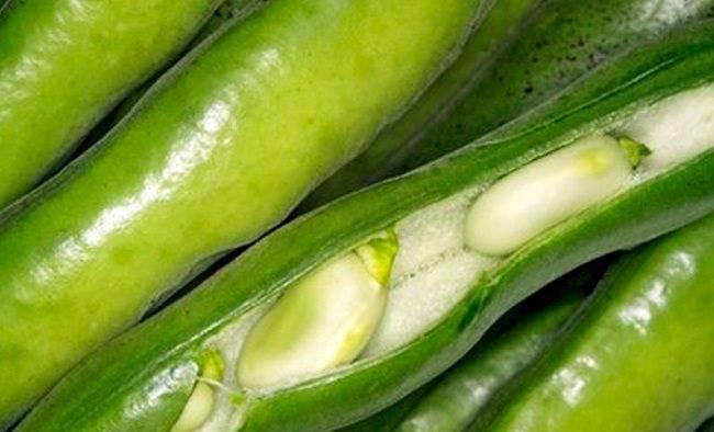 Не только сидерат – как и зачем выращивать черные бобы