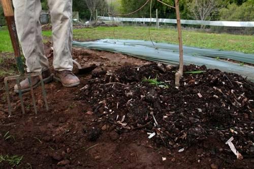Чем подкормить грушу весной, видео