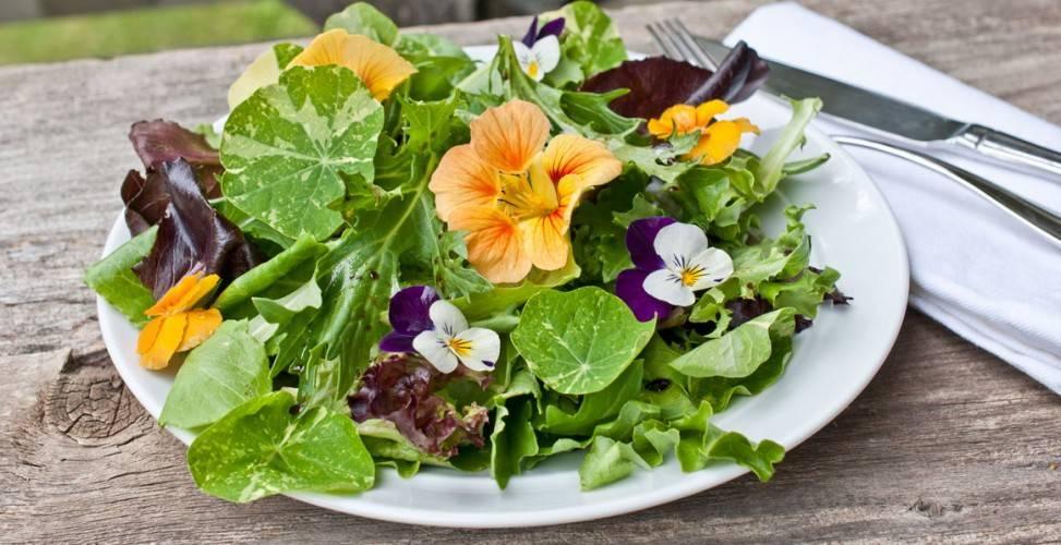 Съедобные цветы в кулинарии удивляют своими возможностями